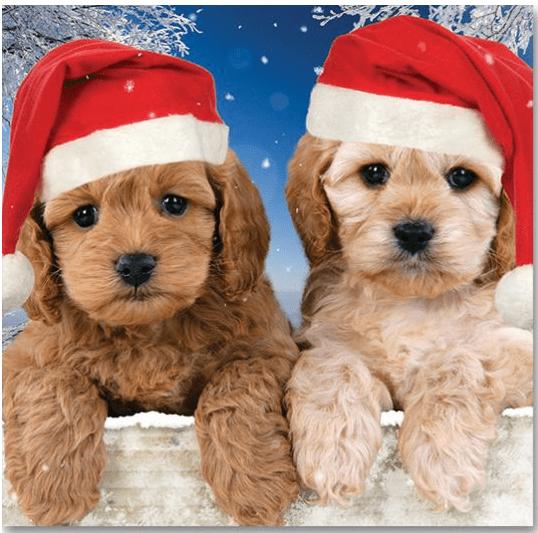 Christmas Puppies.Christmas Puppies 2018 Irish Hospice Foundation