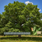 A choice of 8 species of tree